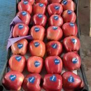 Scarlet Elma İhraç İçin