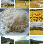 Kargı Osmancık Pirinç -(1 KG)