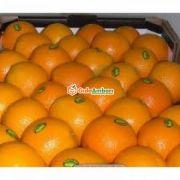 Kıbrıs Portakalı