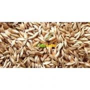 Siyez Buğdayi Tohumu 1 Kg