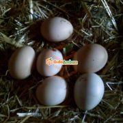 Doğal Tavuk Yumurtası