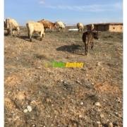 Organik Köy Sütü