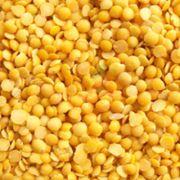 Sarı Mercimek