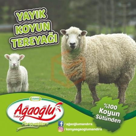 Koyun Terayağı | Gıda Ambarı
