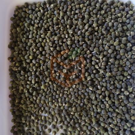 Bamya tohumu | Gıda Ambarı