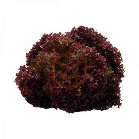 Lolorosa Akdeniz Salata (Adet) | Gıda Ambarı