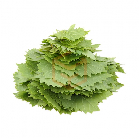 Yaprak Asma Taze (500 Gr)  | Gıda Ambarı