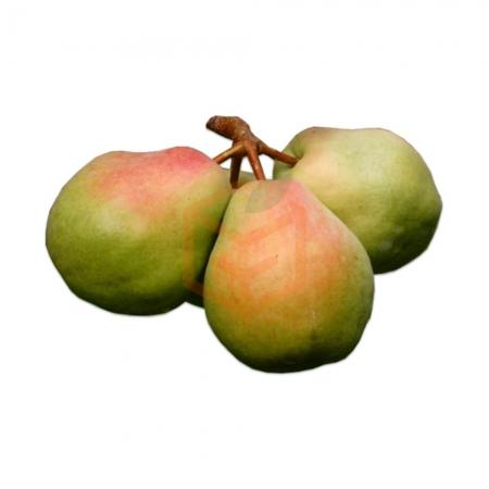 Armut Malatya (kg)  | Gıda Ambarı