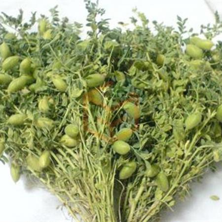 Taze Nohut (Demet) | Gıda Ambarı