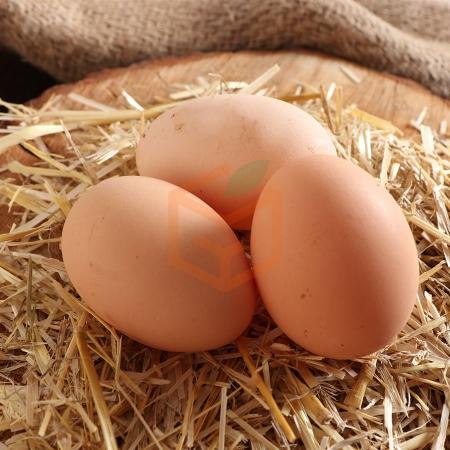 Köy Yumurtası (15 Adet) | Gıda Ambarı