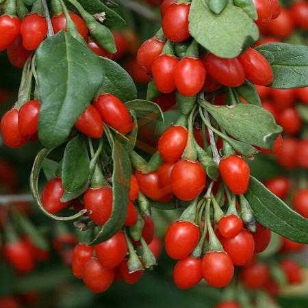 Goji Berry Kurt Üzümü (250 Gr ) | Gıda Ambarı