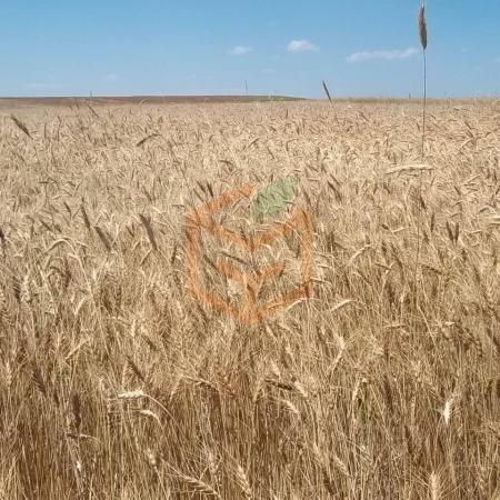 Tam Buğday Unu | Gıda Ambarı