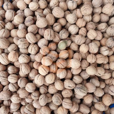 Yeni Mahsul Kabuklu Ceviz | Gıda Ambarı