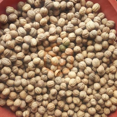 Kabuklu Ukrayna cevizi | Gıda Ambarı