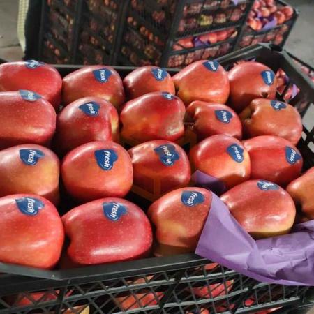 Scarlet Elma İhraç İçin | Gıda Ambarı