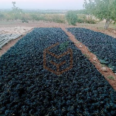 Sergi Karası Çekirdekli Tahnebi Siyah Üzüm   Gıda Ambarı