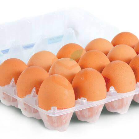 15' li Yumurta | Gıda Ambarı